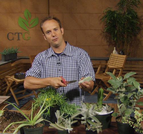 propagate succulent Eric Pedley East Austin Succulents