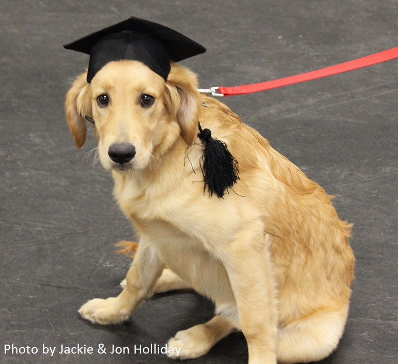 sophie golden retriever graduation day Holliday photo