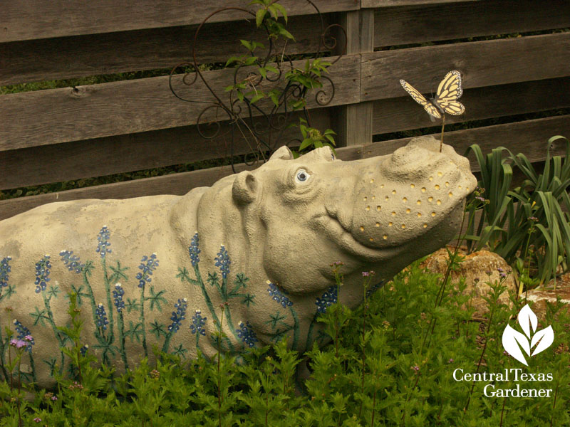 Hutto hippo Donna and Mike Fowler garden Central Texas Gardener
