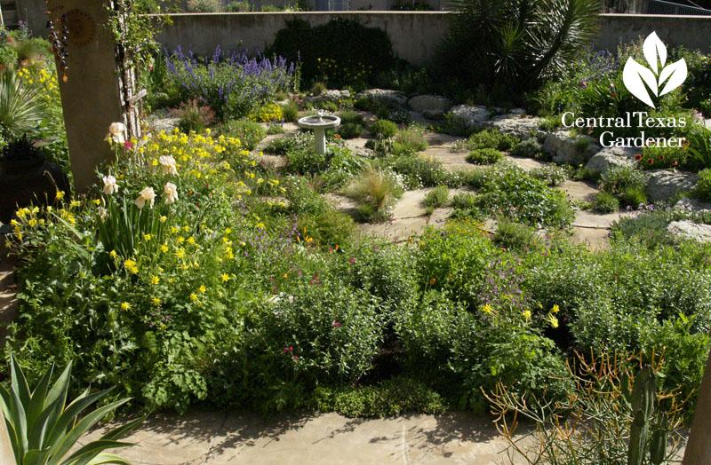 Jenny Stocker drought garden CTG