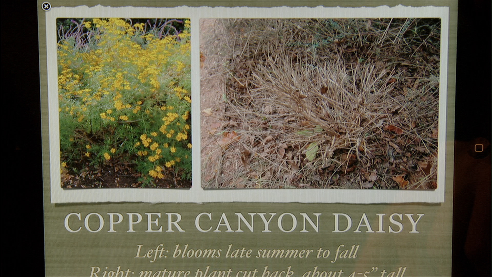 Ginger Hudson's A Guide to Landscape Maintenance for Central Texas Gardens