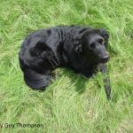 Dog in HABITURF lawn photo by Guy Thompson