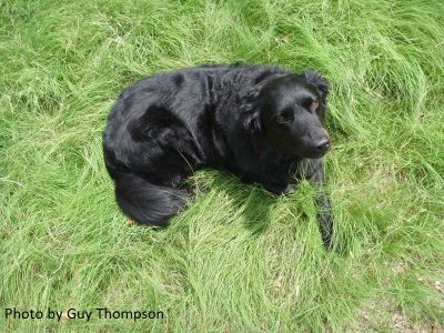 dog training for the garden central texas gardener