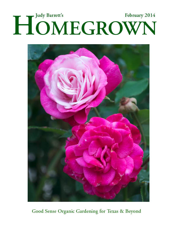 Homegrown Texas magazine Judy Barrett