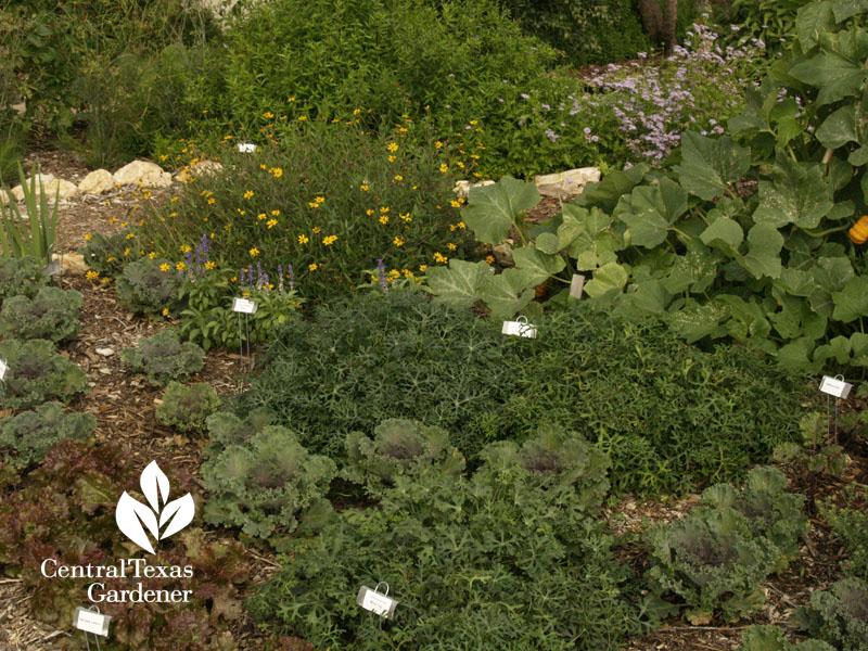 Travis County Extension demonstration garden