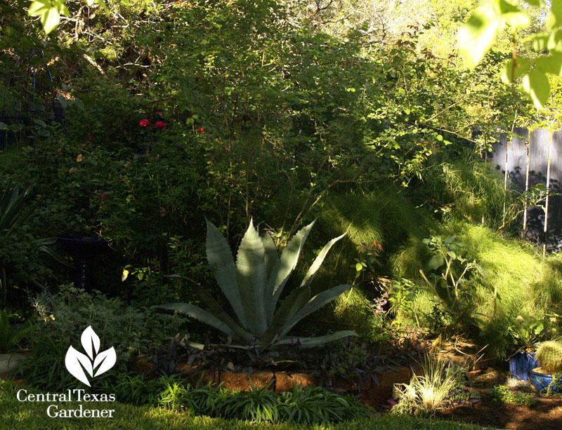 plant structure in shade garden austin texas