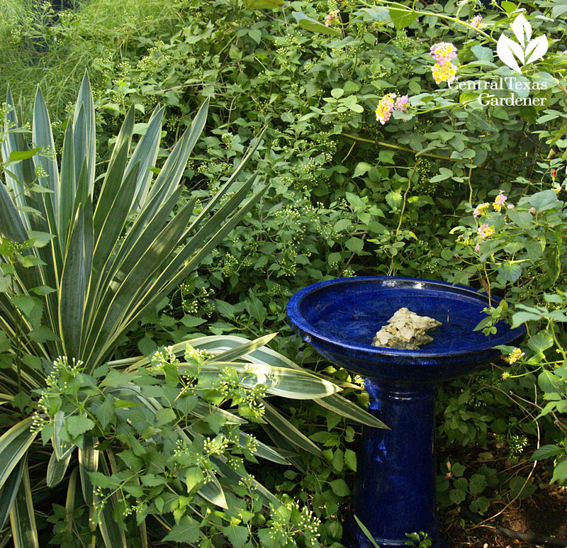 structure plants and birdbath austin texas garden