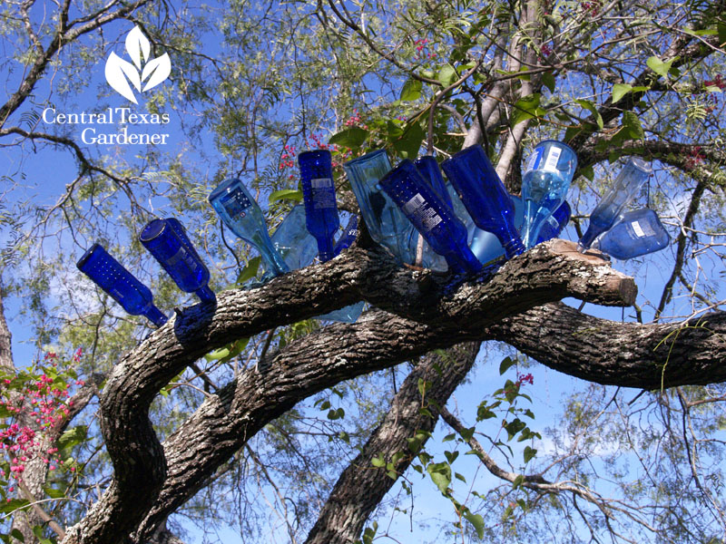 best bottle tree ever austin texas