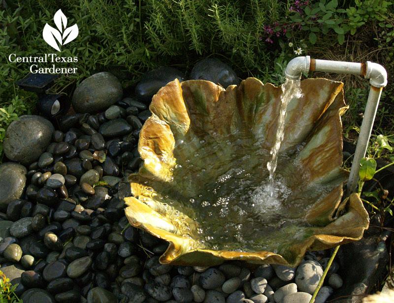 fun garden water fountain austin texas central texas gardener