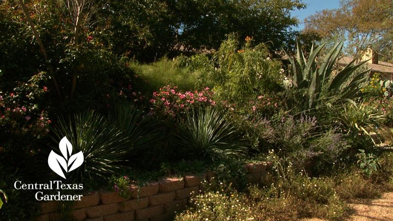 No lawn front garden Austin Texas