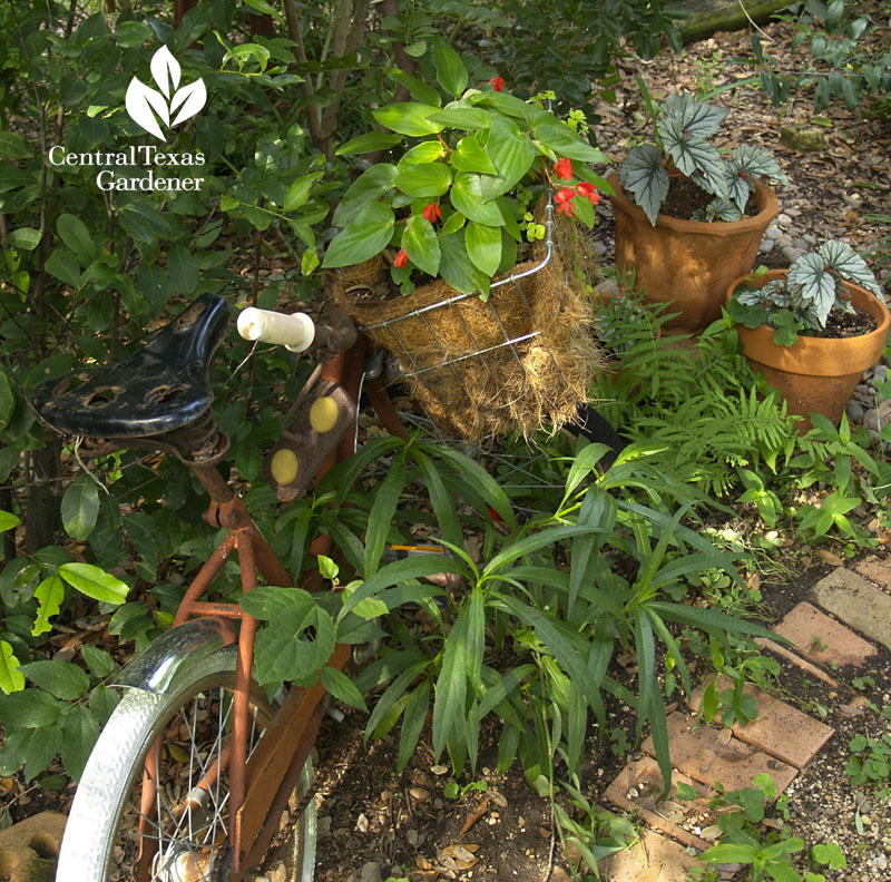 Bicycle shade garden plants Robin Howard Moore
