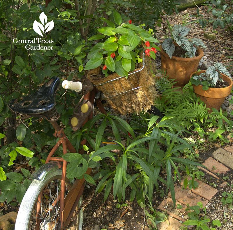 Bicycle shade garden plants Robin Howard Moore