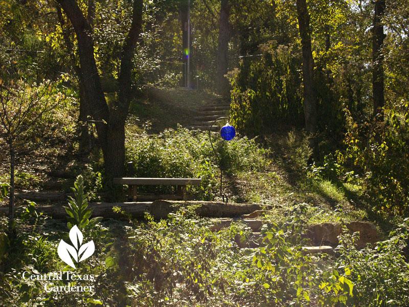 hillside habitat restoration austin texas