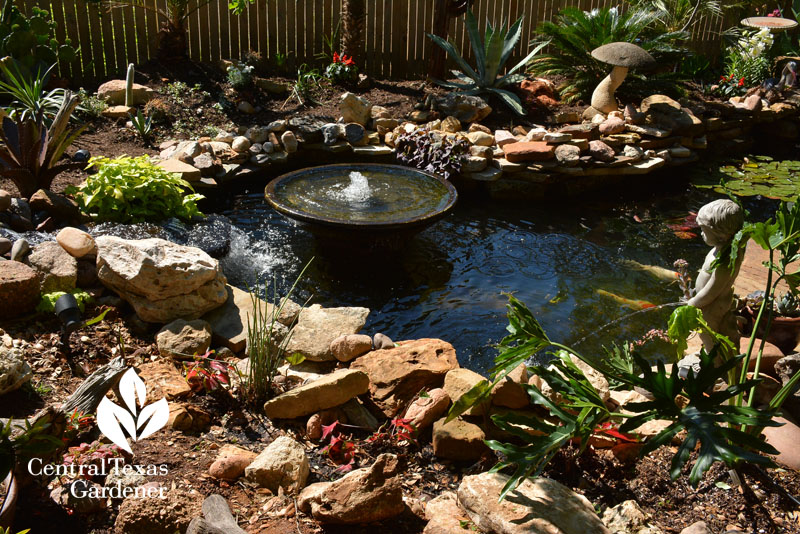 pond replaces grass central texas gardener