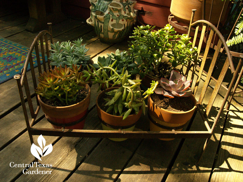 lucinda hutson's succulent bed container