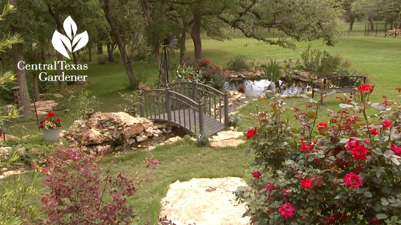 pond design Hill Country Water Gardens & Nursery