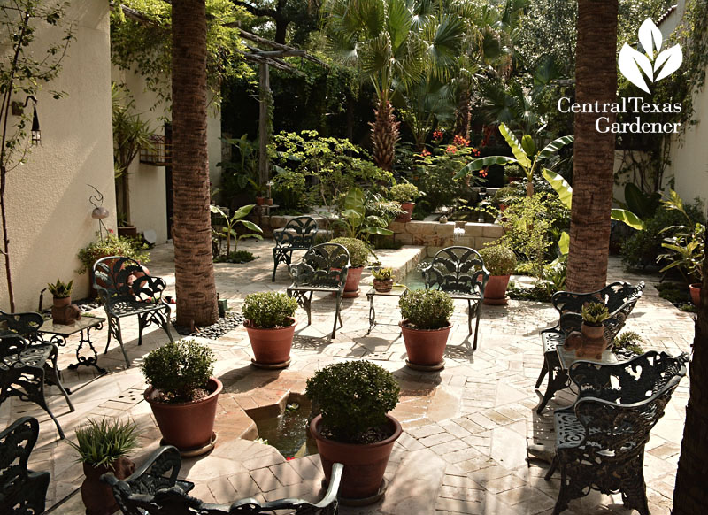 san antonio courtyard central texas gardener