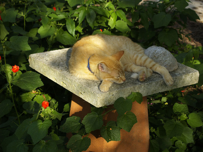 limestone slab on inverted pot for plant stand or cat nap