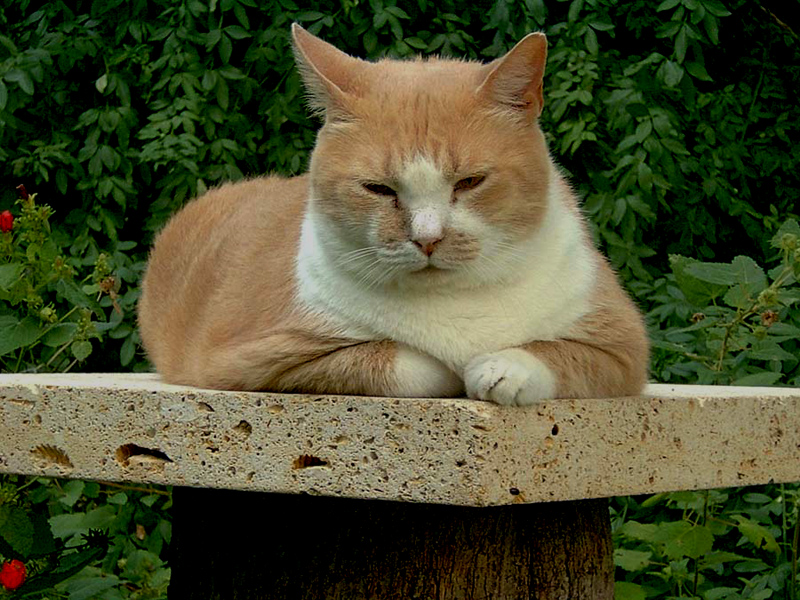 limestone slab on tree stump cat perch
