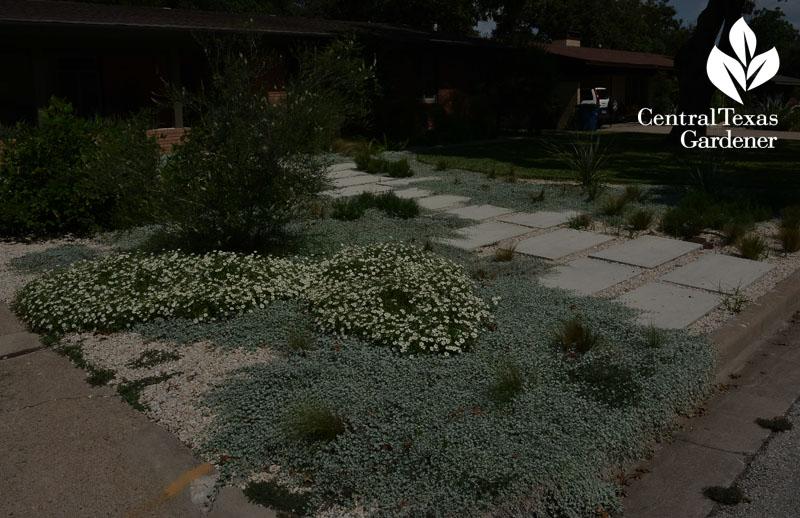 no lawn garden silver ponyfoot, yucca, almond verbena central texas gardener