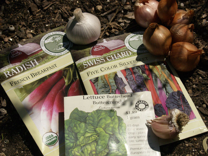 fall vegetable seeds and garlic austin texas