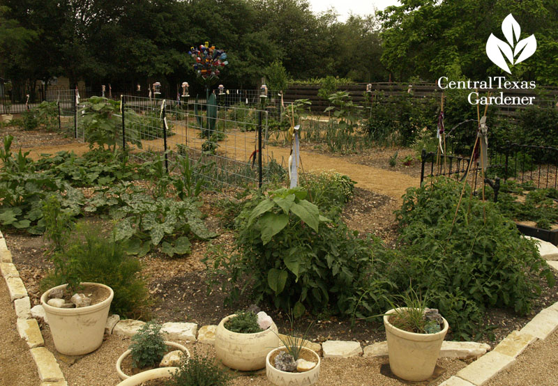 Vegetable Gardening Austin Texas Garden Ftempo