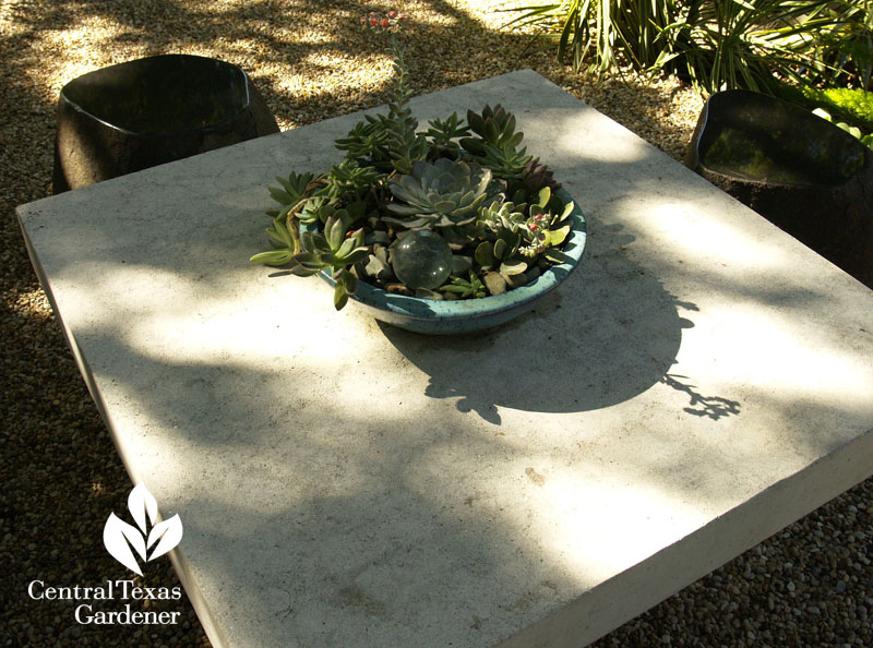 Succulent container table top accent Central Texas Gardener