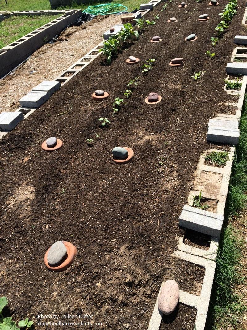 DIY Lavender, Ollas, Lose Lawn Makeover | Central Texas Gardener