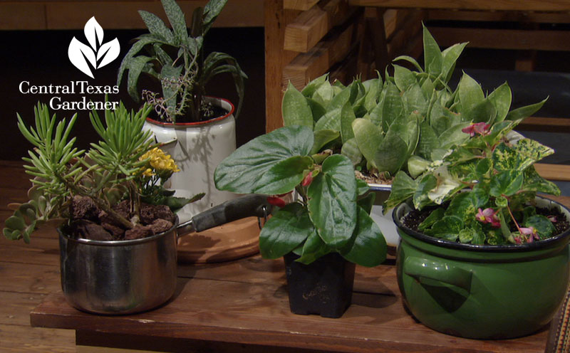 salvaged containers for cute plant pots central texas gardener