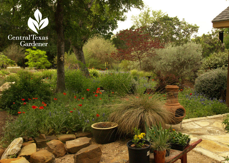 Gorgeous Temple Texas garden Central Texas Gardener