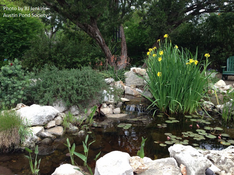 small pond design central texas gardener