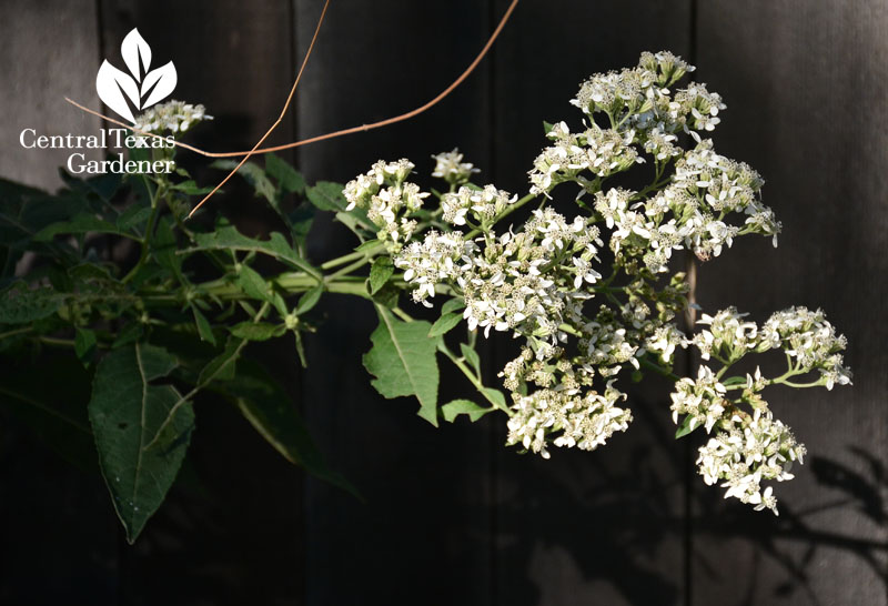 Healing Plants Amp Safe Edibles For Us Amp Wildlife Central