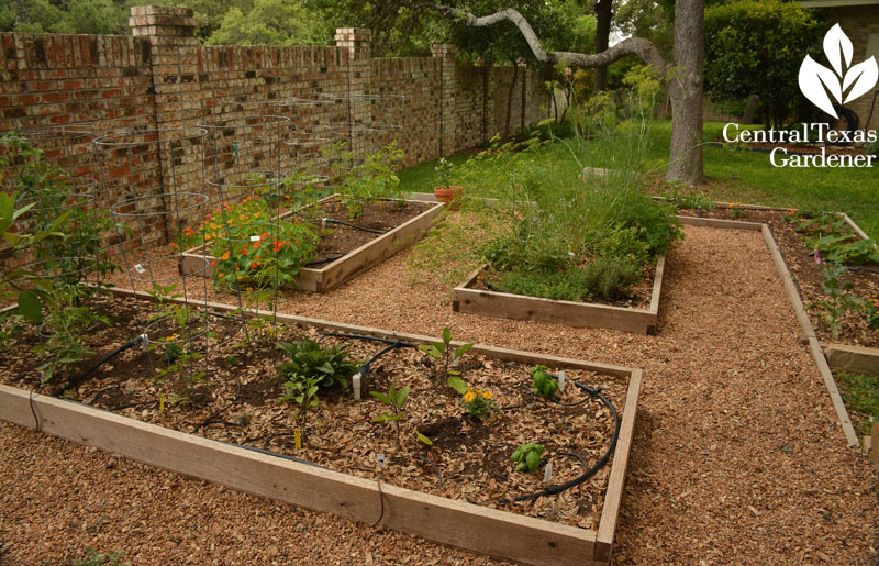 charming vegetable bed design replaces lawn Central Texas Gardener