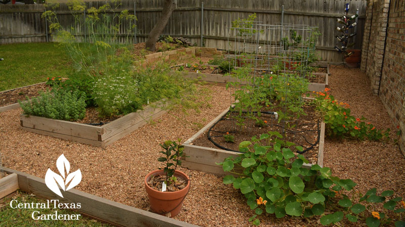 cute vegetable bed design central texas gardener