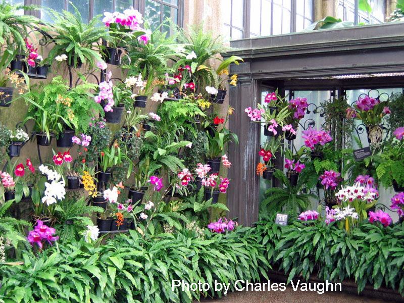 Longwood Gardens orchid house
