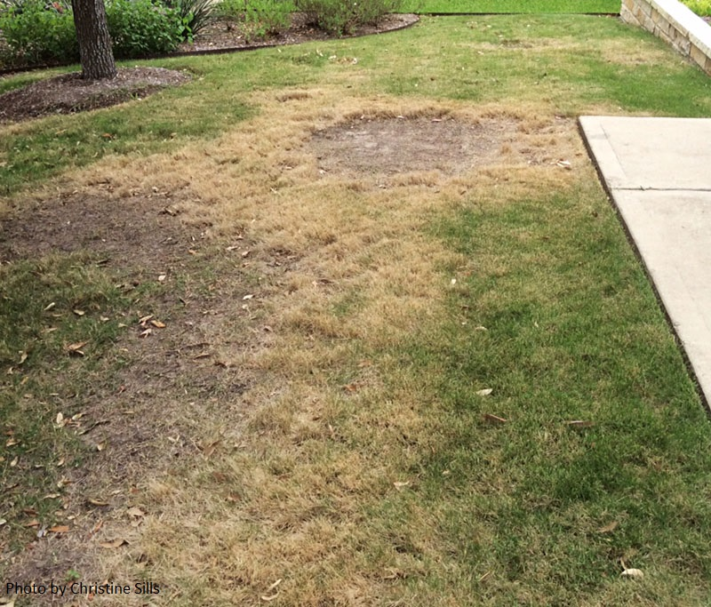 brown patch on Zeon Zoysia Central Texas Gardener