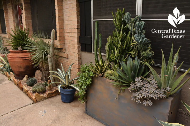 recycled file cabinet as planter Central Texas Gardener