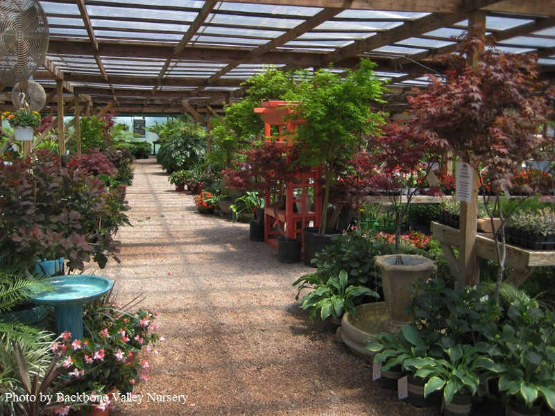 Backbone Valley Nursery