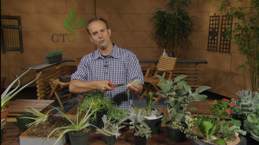 divide succulents by division and cutting Eric Pedley