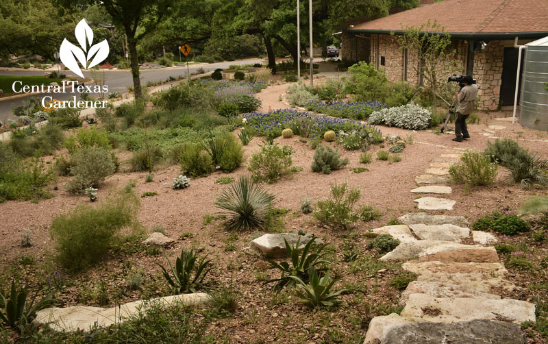Rollingwood City Hall garden from above Central Texas Gardener