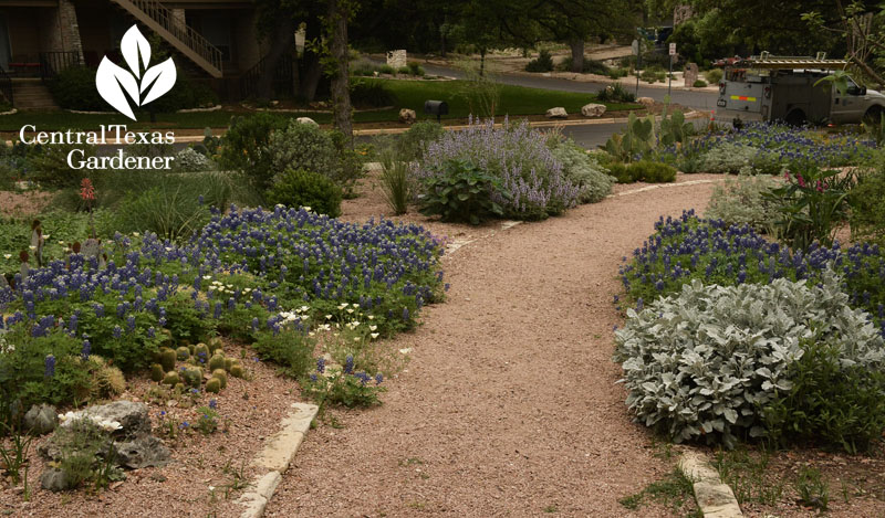 blue and silver bordered path Rollingwood City Hall Central Texas Gardener