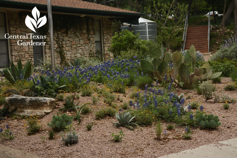 berms and granite for drought plants Central Texas Gardener
