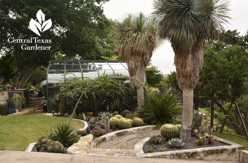 greenhouse succulent beds yucca rostrata Pavlat Central Texas Gardener