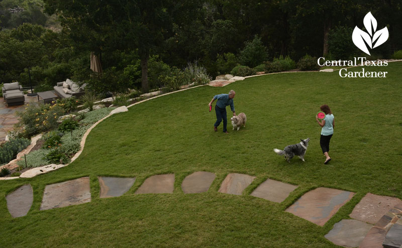 palisades zoysia dog frisbee field Central Texas Gardener