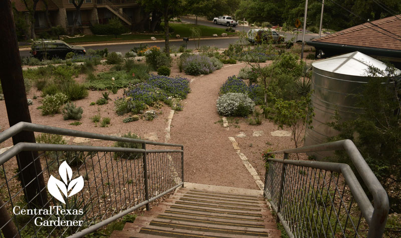 steps to Rollingwood City Hall Garden Central Texas Gardener