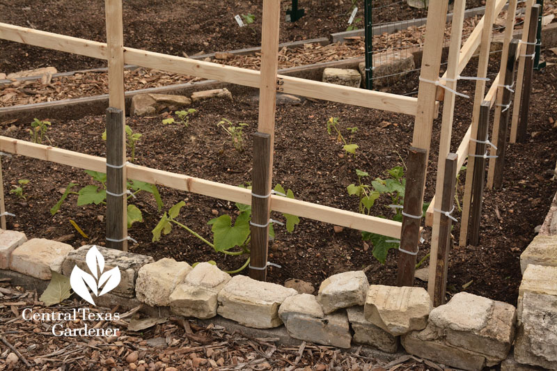 staking trellis Sustainable Food Center Central Texas Gardener
