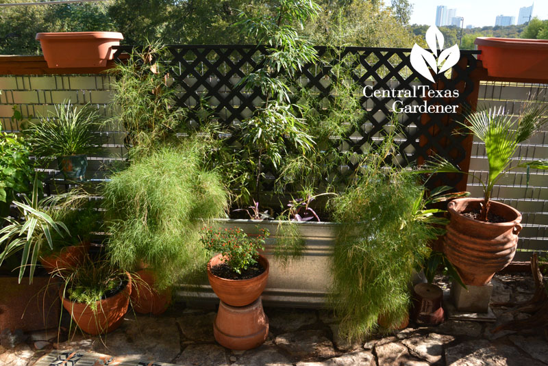 stock tank and patio containers Central Texas Gardener