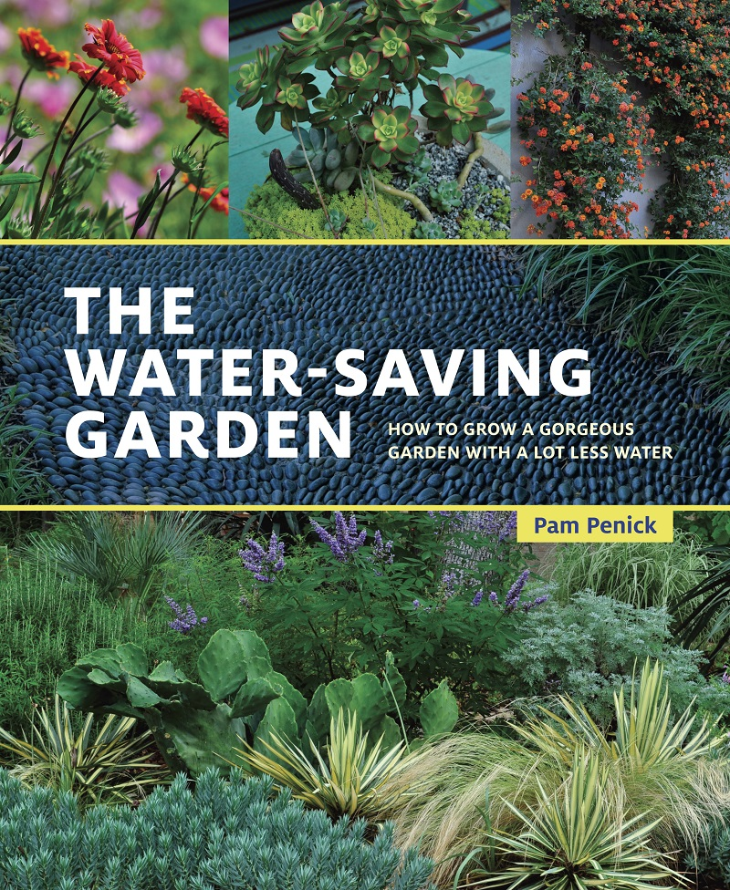 interview Pam Penick Water Saving Guide