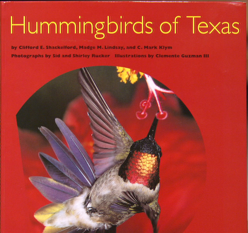 Hummingbirds of Texas Central Texas Gardener