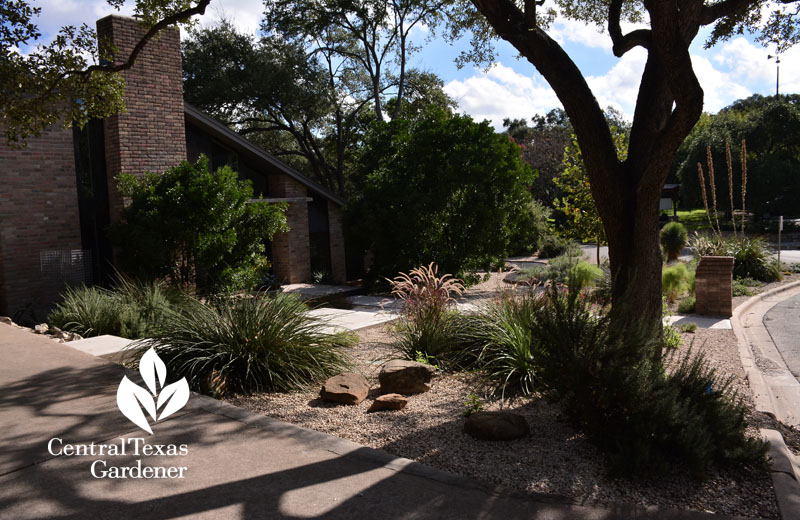 no lawn front yard water control Central Texas Gardener